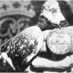 The celebrated war pigeon, G.I. Joe, receiving the Dickin Medal for gallantry during WWII.  His swift delivery of a message to Allied bombing forces saved over 1000 lives of British troops and civilians in the Italian village of Calvi Vecchia.