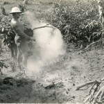 A Seabee sprays greenery with DDT.  Tubabao, Samar, Philippines, 1945.  Gift of James L. Dale, 2003.283.083.