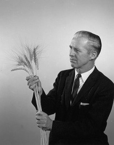 Norman Borlaug with spikes of his new high yielding wheat variety. Image courtesy of the International Center for Maize and Wheat Improvement.