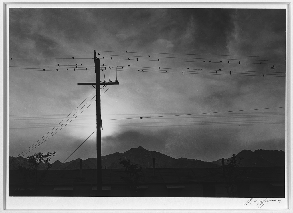 Birds on wire, evening, Manzanar Relocation Center by Ansel Adams. Courtesy of the Library of Congress.