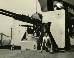 Snafu, a U.S. Navy Mascot